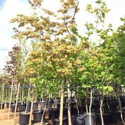 Photo Of Tri Star Nurseries Garden Center Florist Surrey Bc Canada