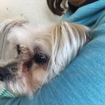 Dog Grooming Downey Ca