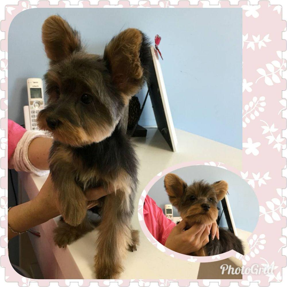 Cutie Pet Grooming