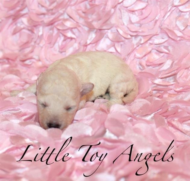 Little Toy Angels: 7571 S Bluff Springs Rd, Virginia, IL