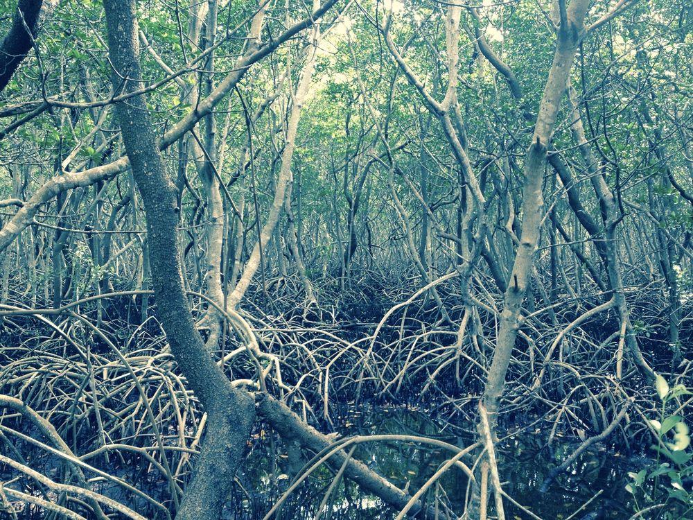 Weedon Island Preserve: 1800 Weedon Dr NE, St. Petersburg, FL