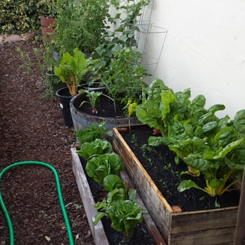 Marvelous Photo Of Cottage Gardens Of Petaluma   Petaluma, CA, United States.  Lettuces And