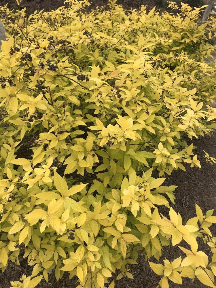 Bravo Lake Botanical Garden: 577 E Naranjo Blvd, Woodlake, CA