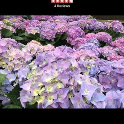 Source · Photo Of TLC Garden Centers   Oklahoma City, OK, United States