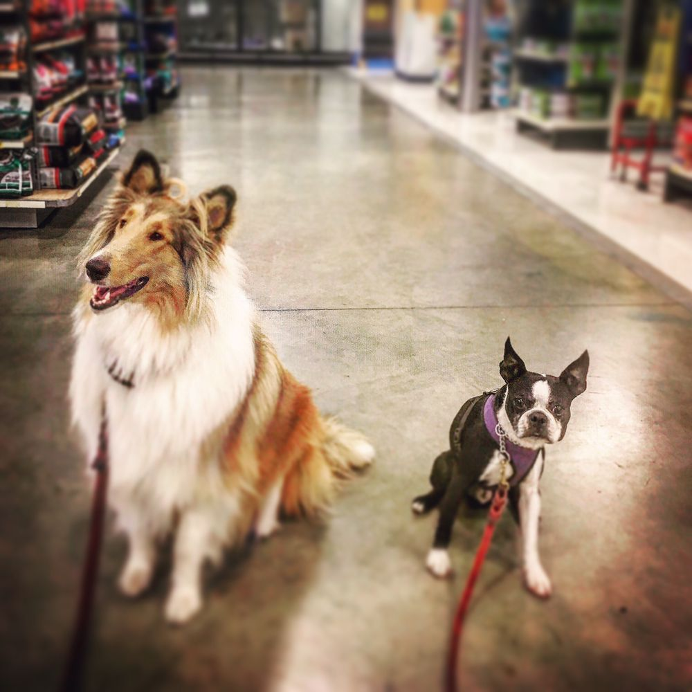 Affordable Dog Training & Anti-Aggression