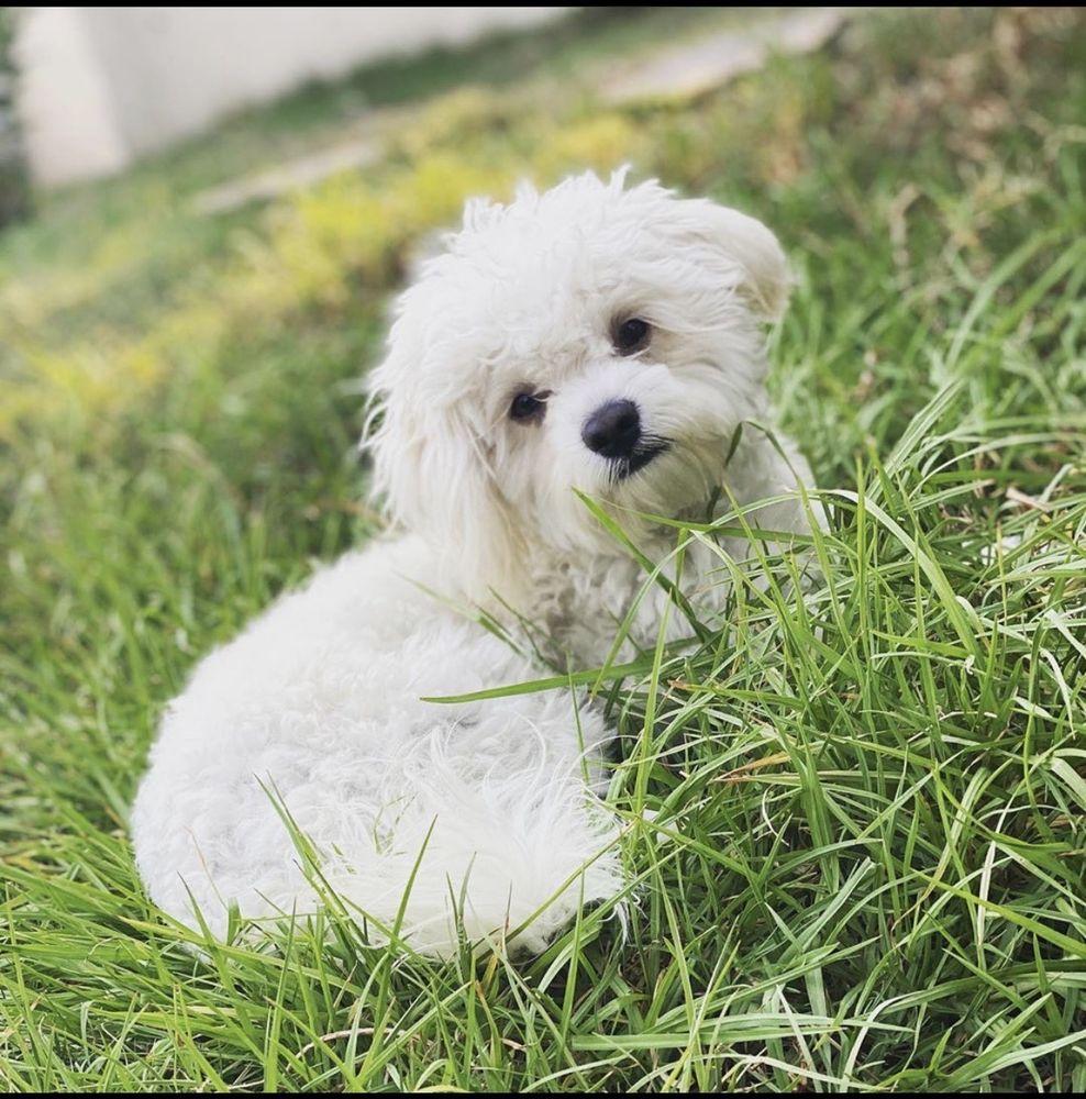 Shay's Behavioral Dog Training