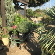 Taking This Tree Photo Of Village Nurseries Orange Ca United States Sarah Scanning My