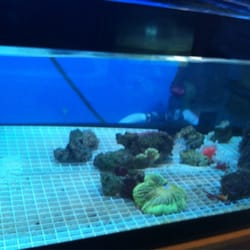 Blue Lagoon Aquarium 31 Photos 32 Reviews Pet Stores