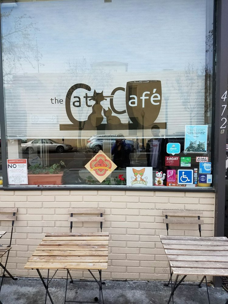 San Diego Cat Cafe Yelp