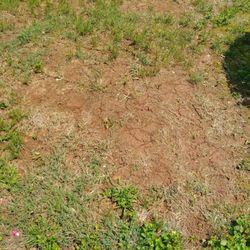 Photo Of Top Turf Lawn Care And Pest Management Lawrenceville Ga United States