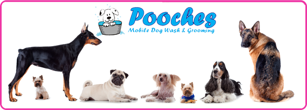 Pooches Mobile Dog Grooming Blackpool Blackpool