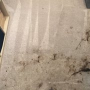 ... Photo Of StainLifters Carpet Cleaning   Winter Garden, FL, United  States ...