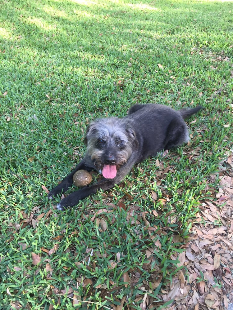 Photo of Soapy's Dog Wash - Apopka, FL, United States. My older girl