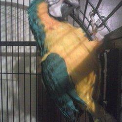 parrot sitter