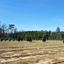 photo of grant christmas tree farm syrup mill elizabeth la united states - Christmas Tree Farm Louisiana