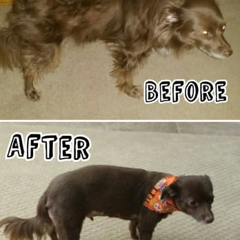Best Dog Groomer In Elk Grove Ca