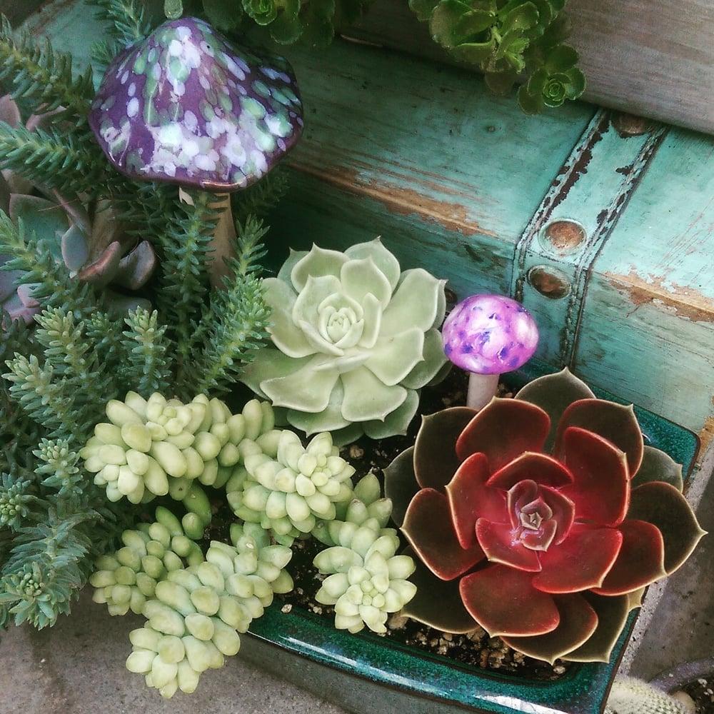 Glendora Gardens Nursery and Tree Farm: 1132 S Grand Ave, Glendora, CA