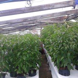 Glasgrow hydroponics 69 foto colture idroponiche 15 - Colture idroponiche in casa ...