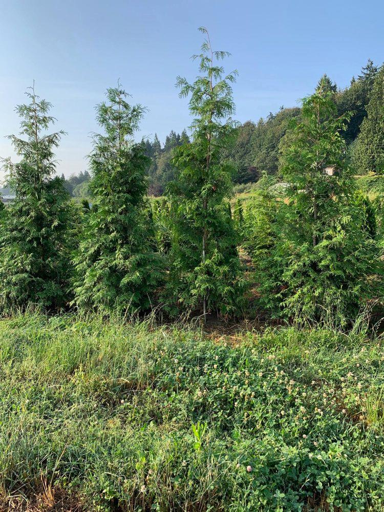 Green Giant Nursery: 10225 Lowell Larimer Rd, Everett, WA
