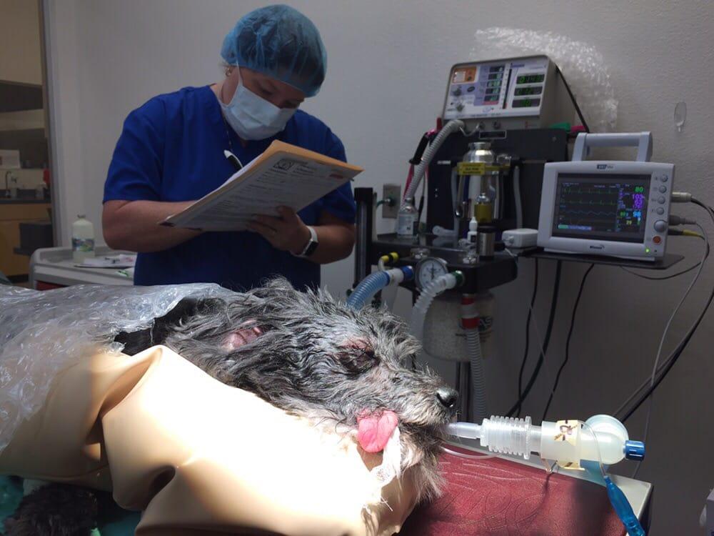 Sevoflurane anesthesia, ventilator, ECG, capnometer, pulse