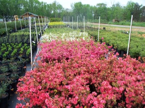 Verona Caney Gardens & Landscaping: 2975 Verona Caney Rd, Lewisburg, TN