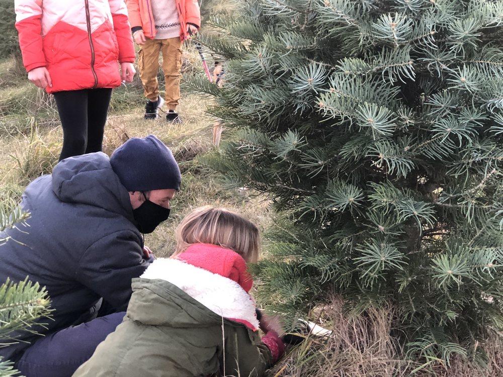 Ben's Christmas Tree Farm: 7720 Ryan Rd, Harvard, IL