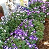 Armstrong Garden Centers 28 Photos 46 Reviews Nurseries