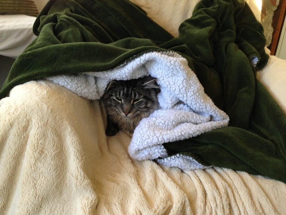 Evergreen Cat Lodge Reviews