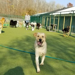 Sterling Meadows Kennel - 3756 Indian River Rd, Virginia