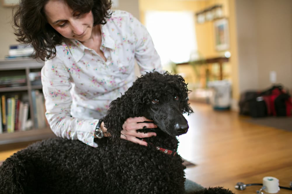 Holistic Veterinary Care Service