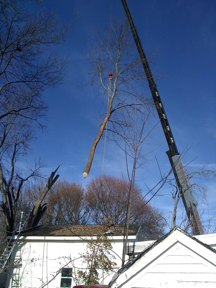 Davis Tree Services: 618 Irving St, Olean, NY