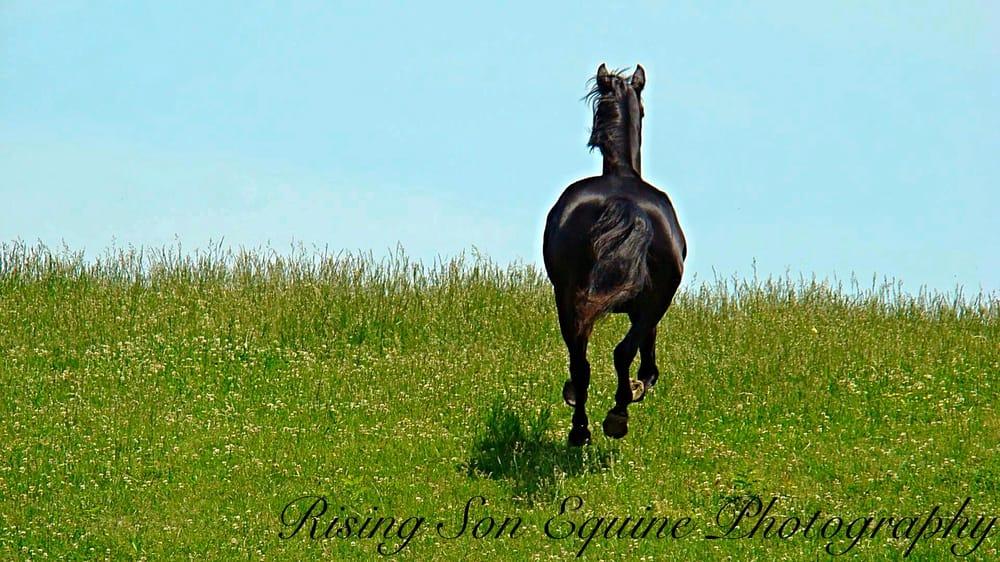 Rising Son Equestrian Services: 136 Rambo Ct, Linden, VA