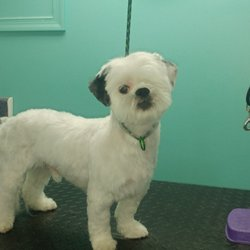 ace48fb9908 Terry's Top Dog Pet Salon - 24 Photos - Pet Groomers - 4 Rosalie Ln ...