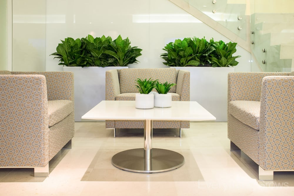 Super modern interior plants make this space - Yelp