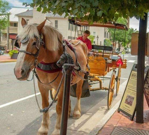 Olde Towne Carriages: 706 Caroline St, Fredericksburg, VA