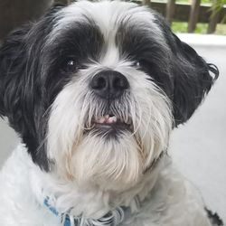 Lucky Puppy Club Pet Sitting 26256 Us 281 N San Antonio Tx