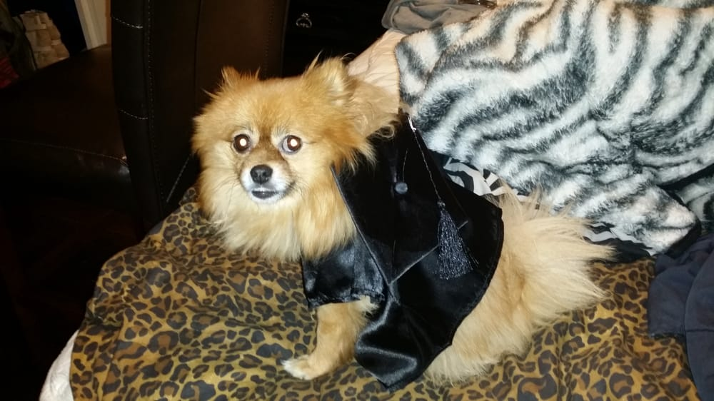Teddy bear outfit (cap and gown) fits my 5lbs Pomeranian!! Lol - Yelp