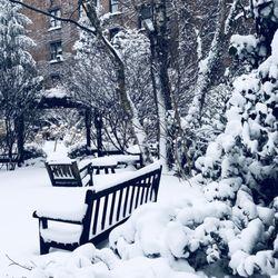Photo Of 6BC Botanical Garden   New York, NY, United States. Winter Garden