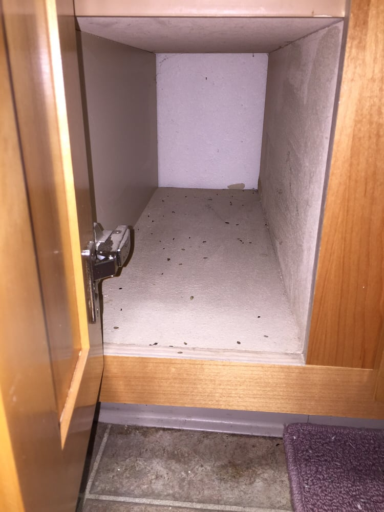 Photo Of Park Ridge Apartments Fresno Ca United States More Mice Droppings