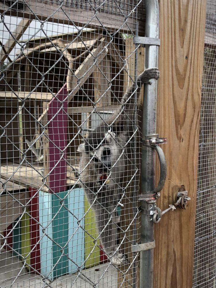 It's A Zoo Life: 4313 Nc Hwy 42, Macclesfield, NC