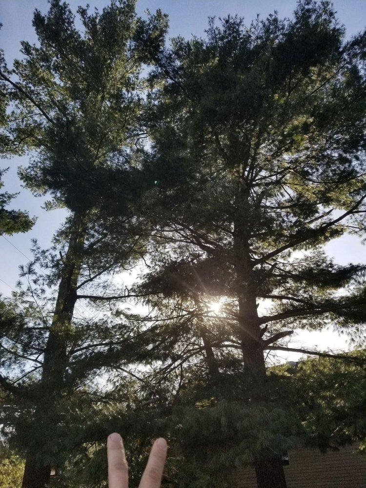 Woodys Tree service: 184 Honey Ln, Battle Creek, MI