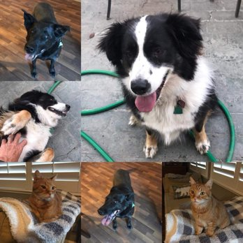 Miller's Love 'Em All Pet Sitting & Dog Walking - 152 Photos