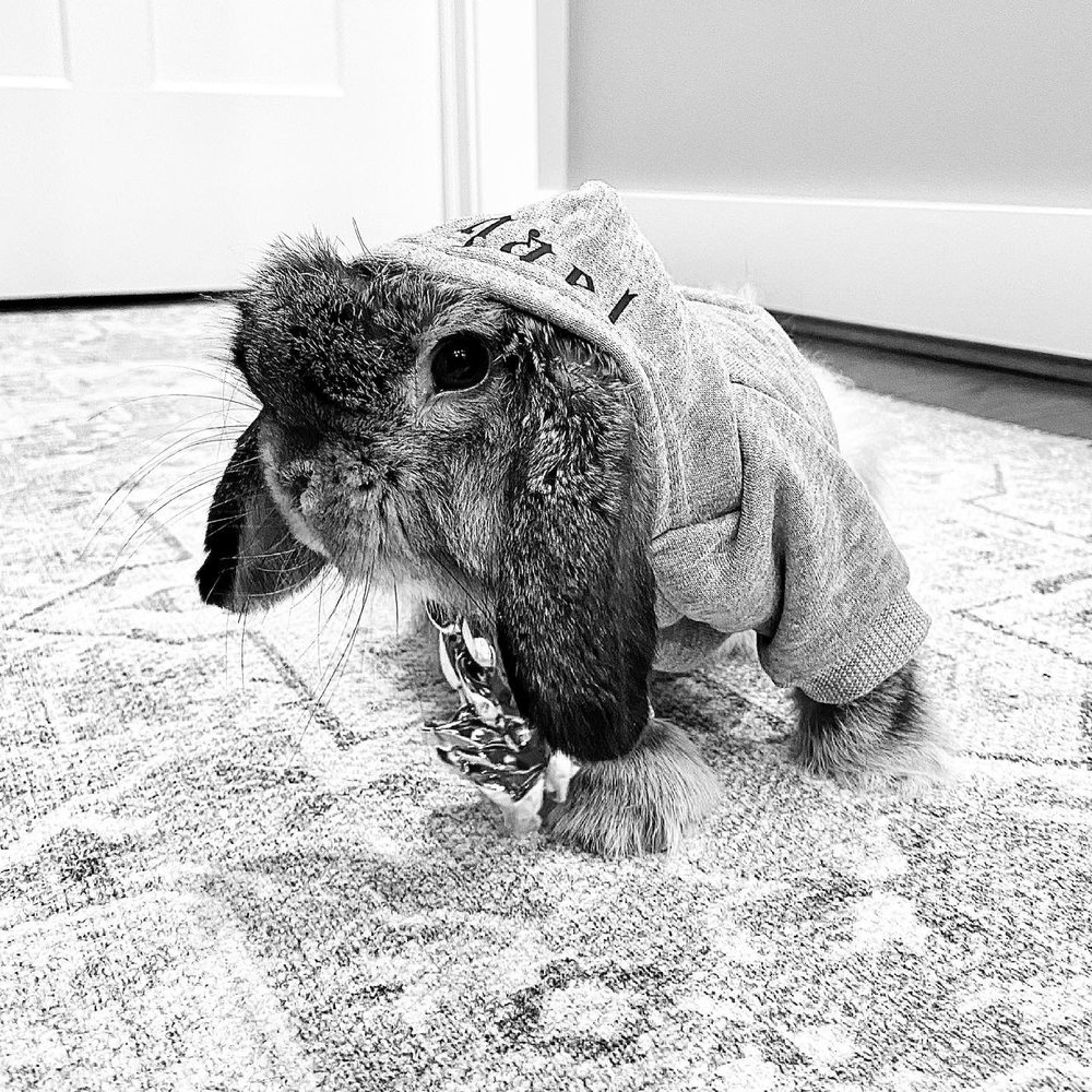 Companion Care Animal Hosp: 5117 Dixie Hwy, Fairfield, OH