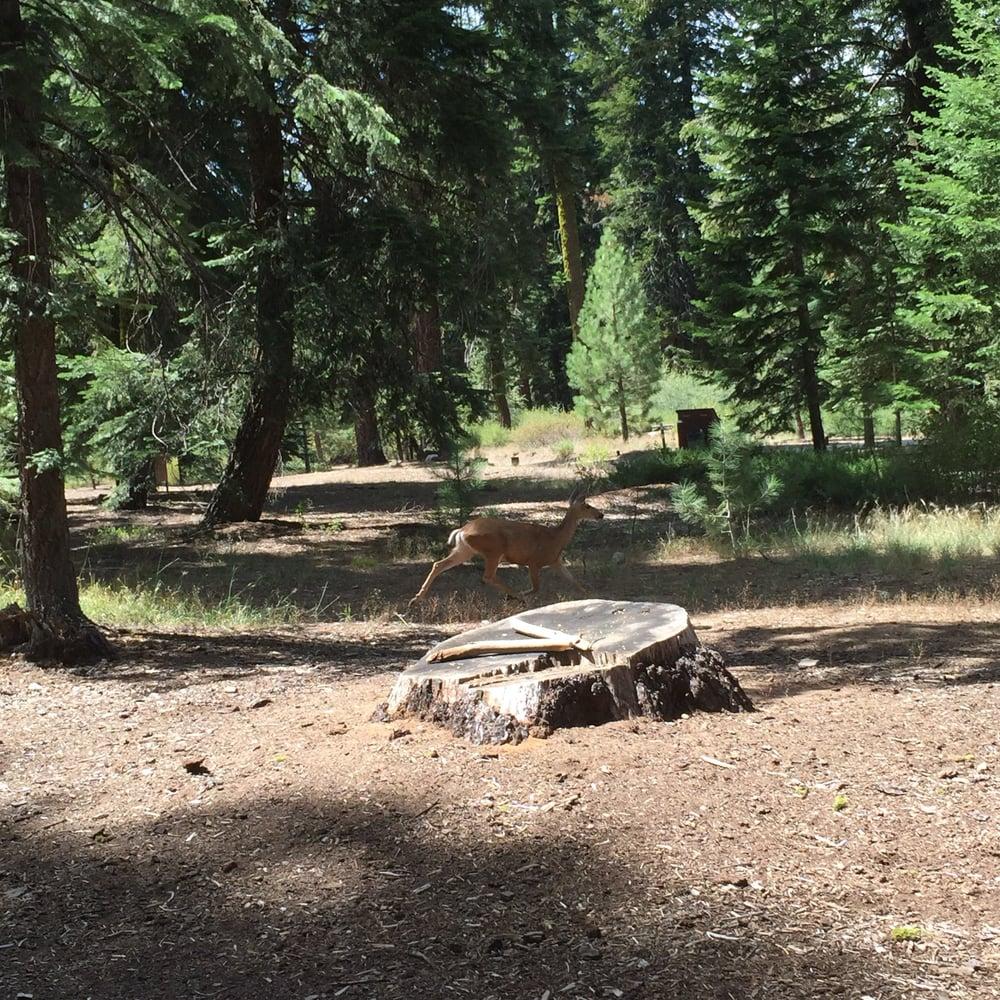 Hwy 55 Near Me >> Quaking Aspen Campground - 55 Photos & 13 Reviews ...
