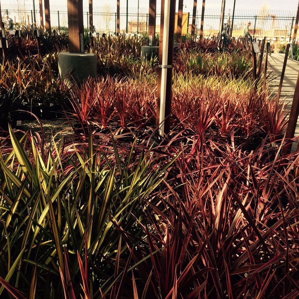 Green Acres Nursery & Supply - 69 Photos & 29 Reviews - Nurseries ...