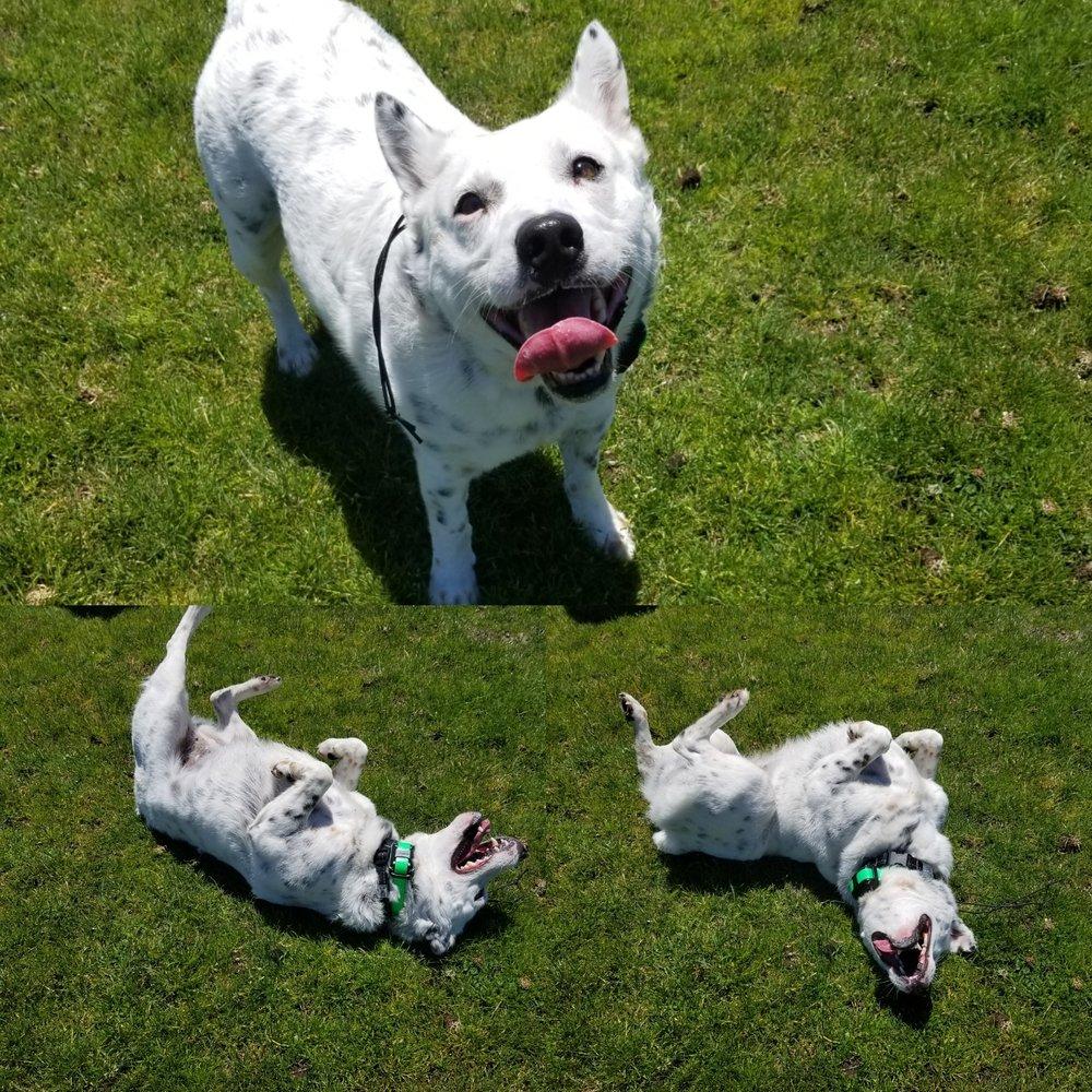 Get Real Dog Training: Oakdale, MN