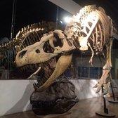 Arizona Museum of Natural History - 108 Photos & 75 Reviews ...
