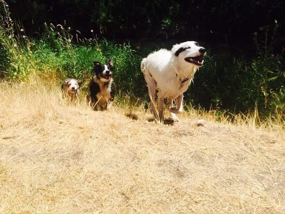 On Caller Pet Adventures: Idaho Falls, ID