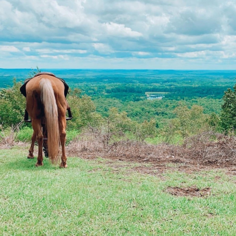 Roosevelt Riding Stables: 1063 Group Camp Rd, Pine Mountain, GA