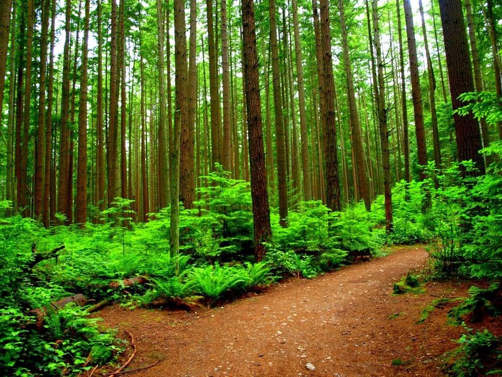 Photos for Pacific Spirit Regional Park - Yelp